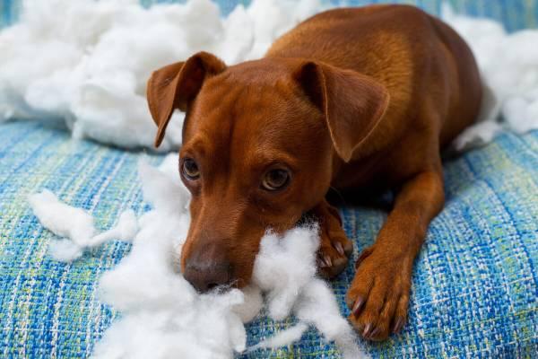 Warum-knabbern-Hunde-Mobel-an